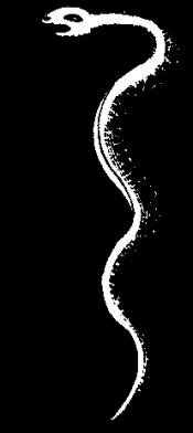 https://oscar.sca.org/images/cImages/837/2017-07-11/14-43-50_serpent.png